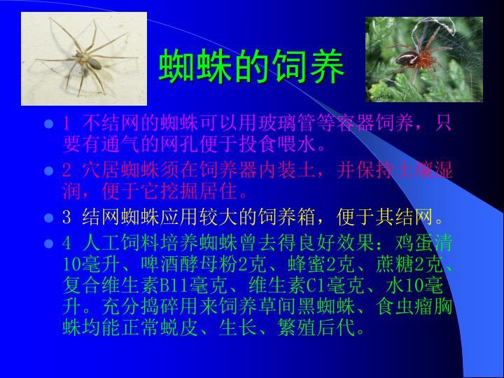 蜘蛛的饲养