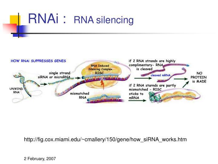 RNAi :