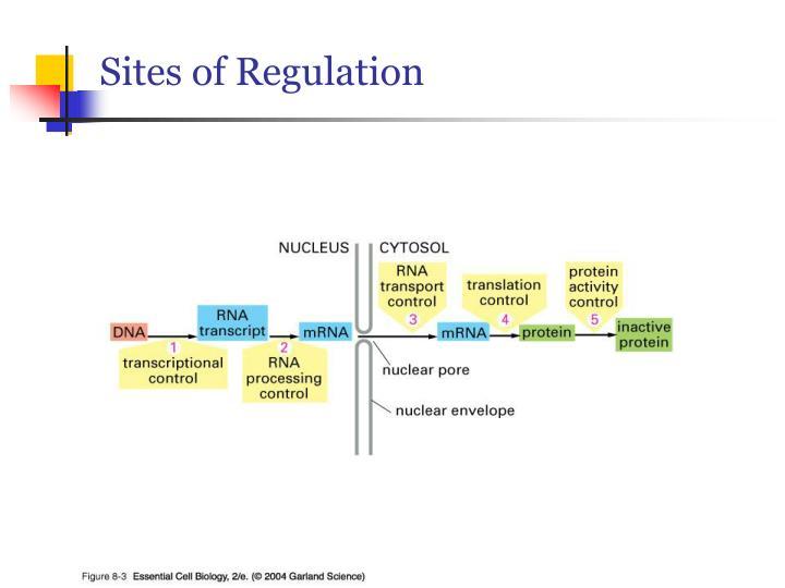 Sites of Regulation