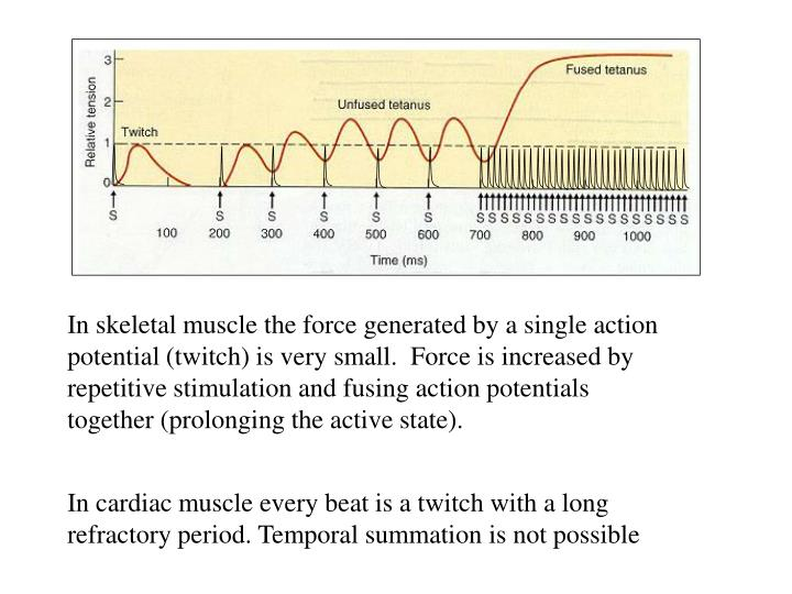 In skeletal muscle the force generated by a single action potential (twitch) is very small.  Force is increased by repetitive stimulation and fusing action potentials together (prolonging the active state).