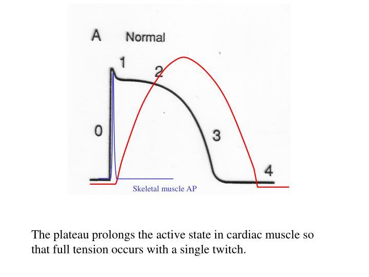 Skeletal muscle AP