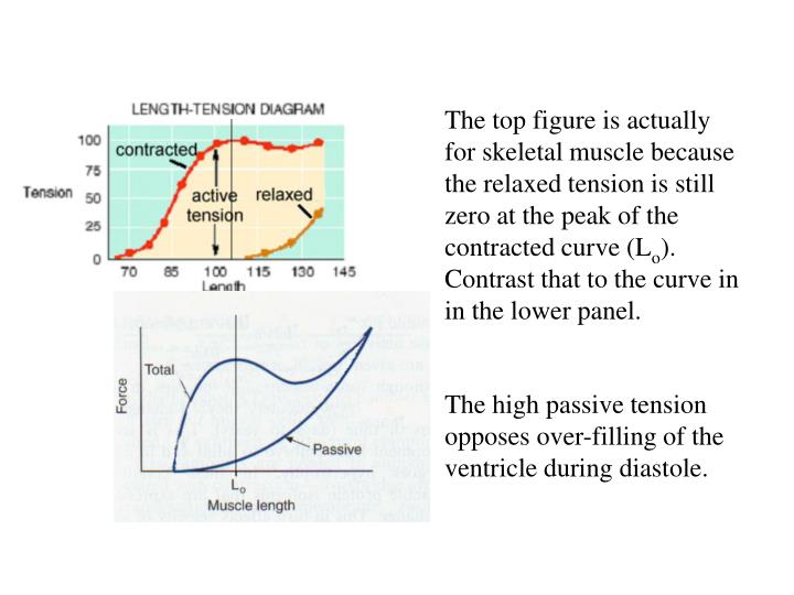 The top figure is actually for skeletal muscle because the relaxed tension is still zero at the peak of the contracted curve (L