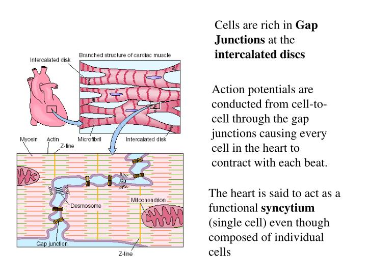 Cells are rich in