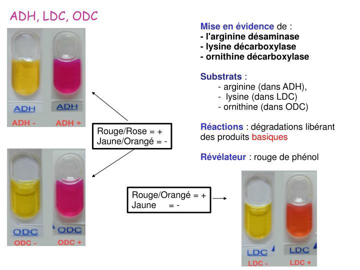 ADH, LDC, ODC