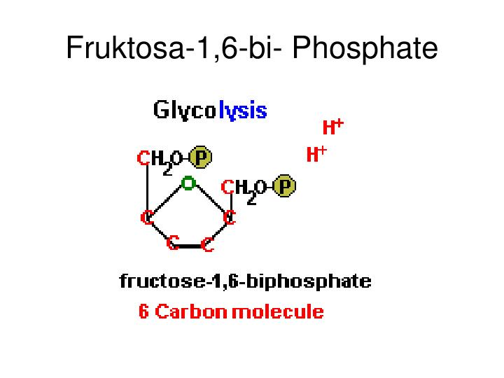 Fruktosa-1,6-bi- Phosphate