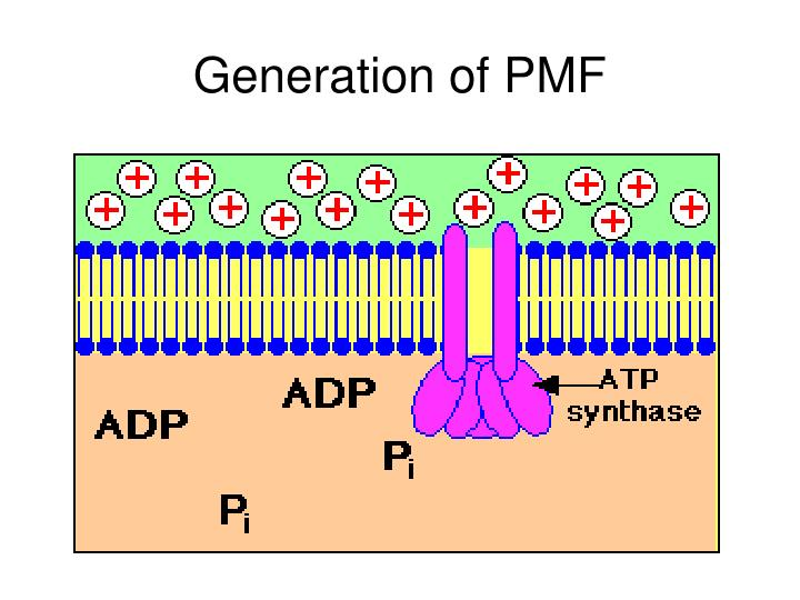 Generation of PMF