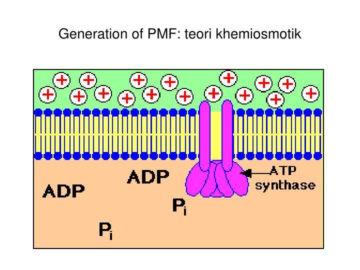 Generation of PMF: teori khemiosmotik