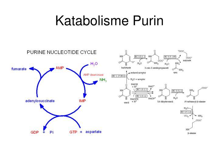Katabolisme Purin