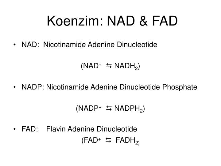 Koenzim: NAD & FAD