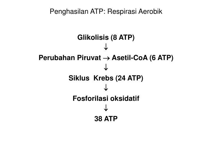 Penghasilan ATP: Respirasi Aerobik