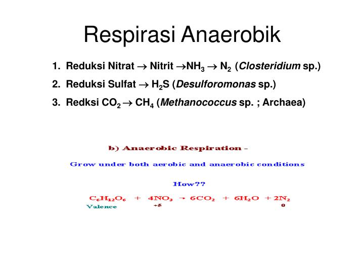 Respirasi Anaerobik