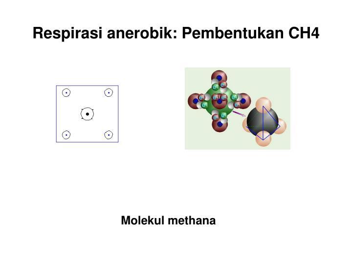 Respirasi anerobik: Pembentukan CH4