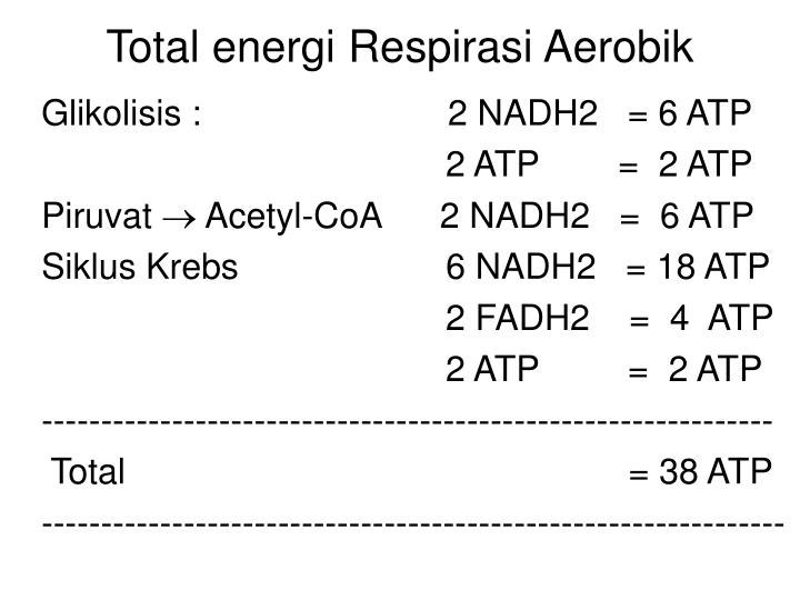 Total energi Respirasi Aerobik