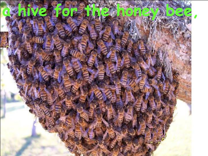 a hive for the honey bee,