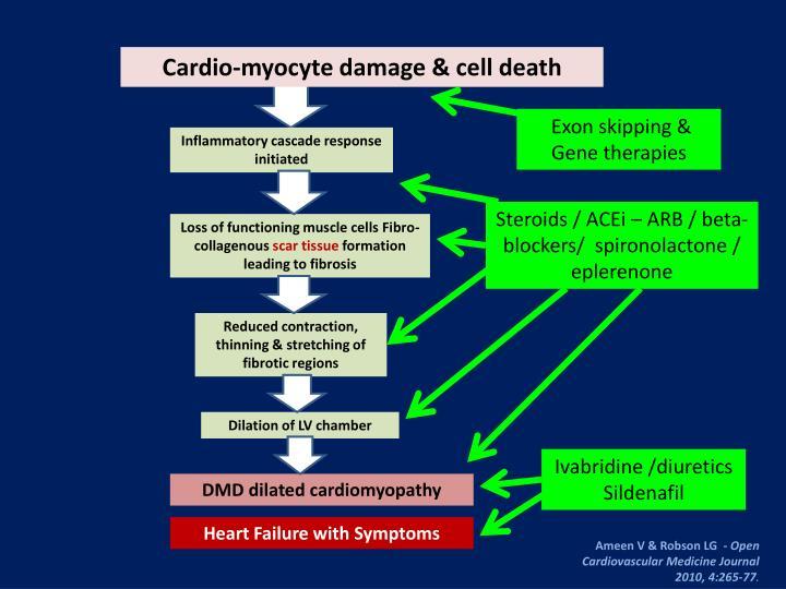 Cardio-