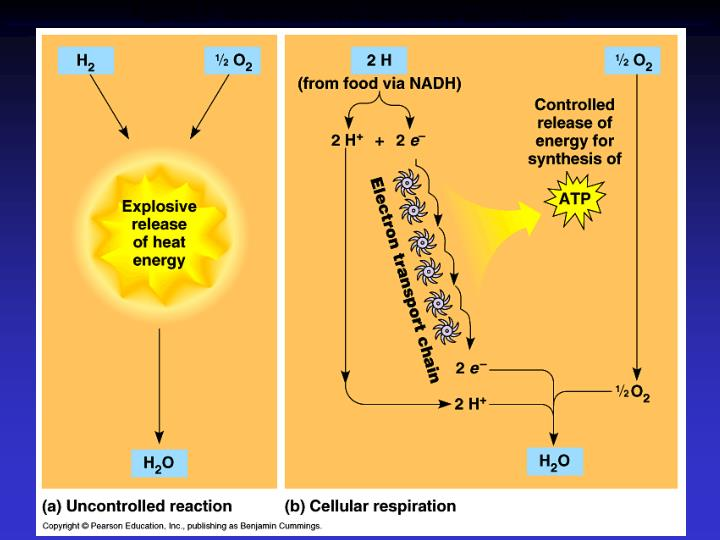 Figure 9.5  An introduction to electron transport chains