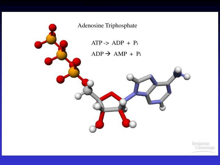 Figure 9.x1  ATP