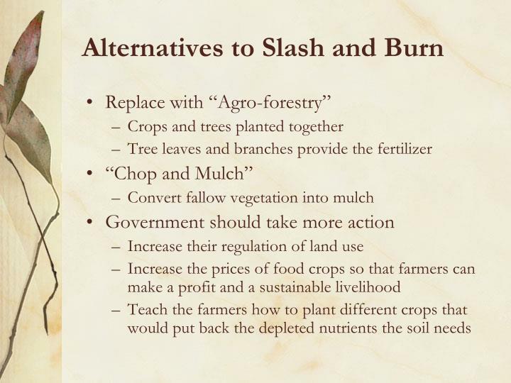 Alternatives to Slash and Burn