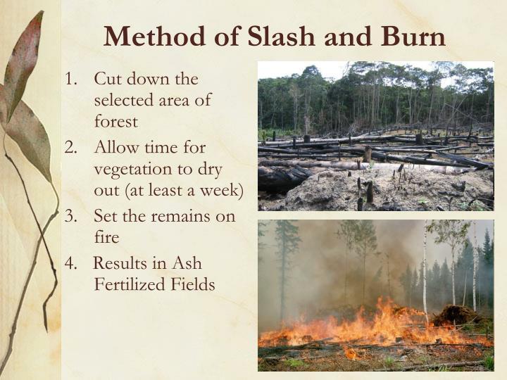 Method of Slash and Burn