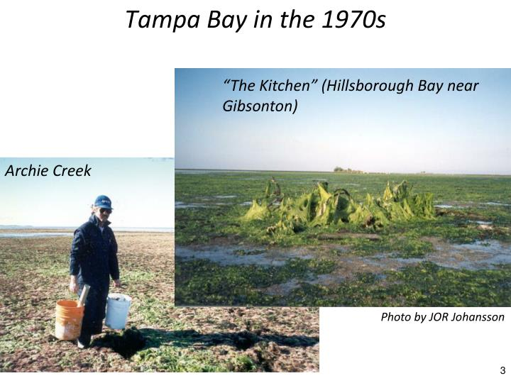 Tampa Bay in the 1970s
