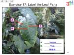 exercise 17 label the leaf parts