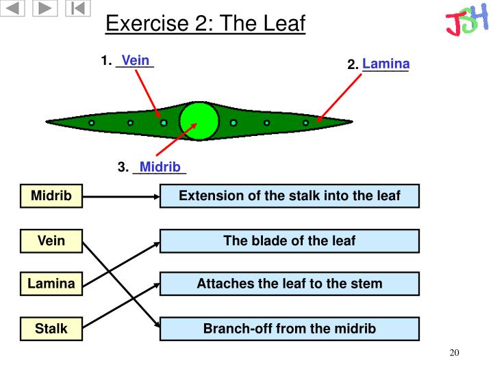 Exercise 2: The Leaf