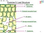 exercise 5 leaf structure