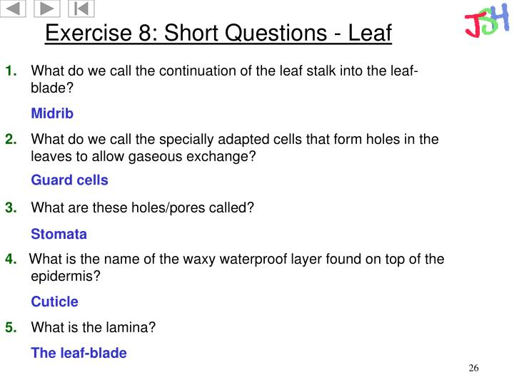 Exercise 8: Short Questions - Leaf