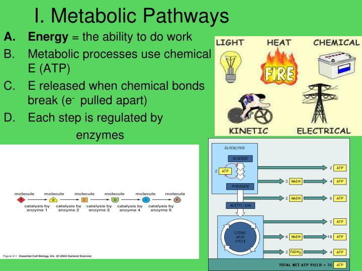 I metabolic pathways