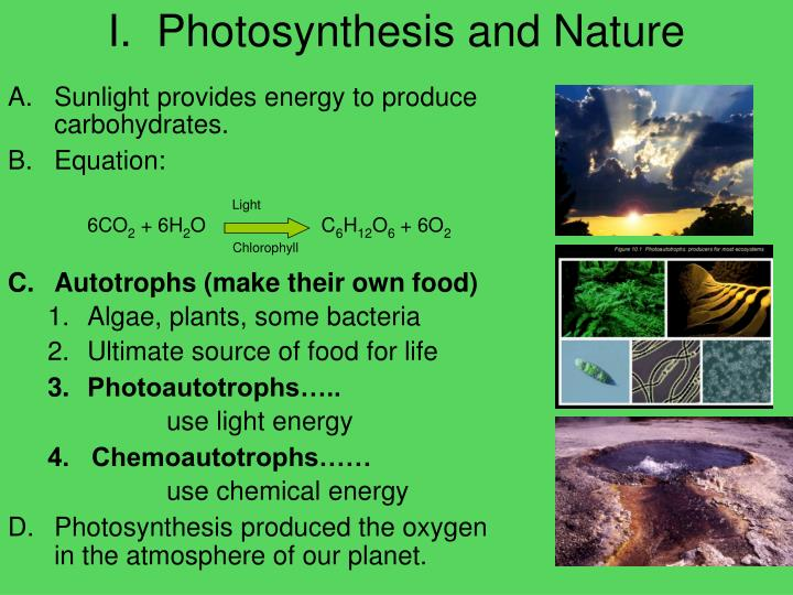 I.  Photosynthesis and Nature
