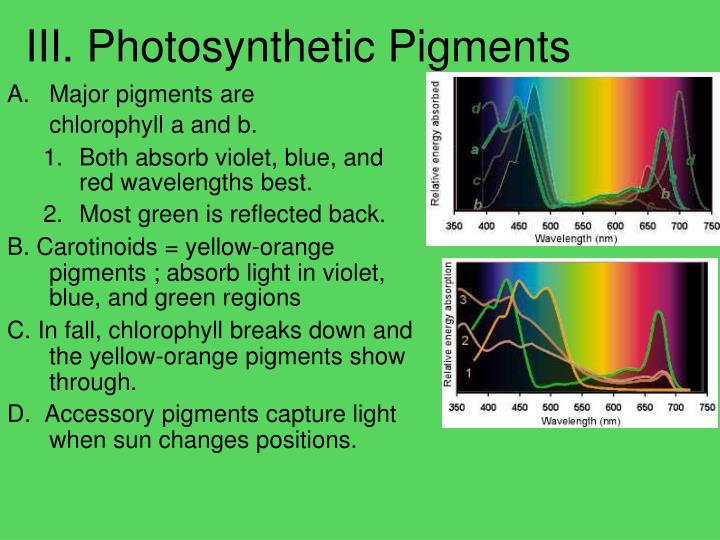 III. Photosynthetic Pigments
