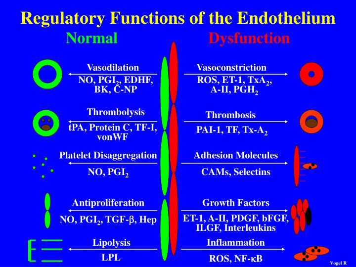 Regulatory Functions of the Endothelium