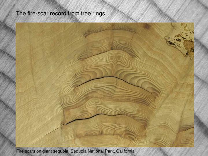The fire-scar record from tree rings.