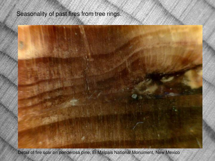 Seasonality of past fires from tree rings.