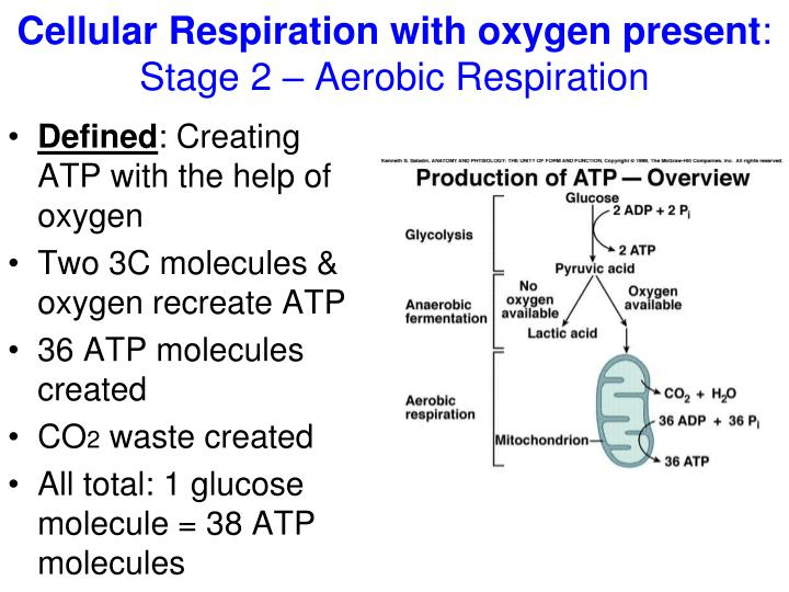 Cellular Respiration with oxygen present