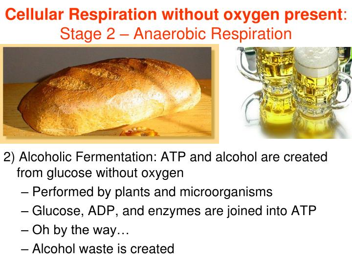 Cellular Respiration without oxygen present