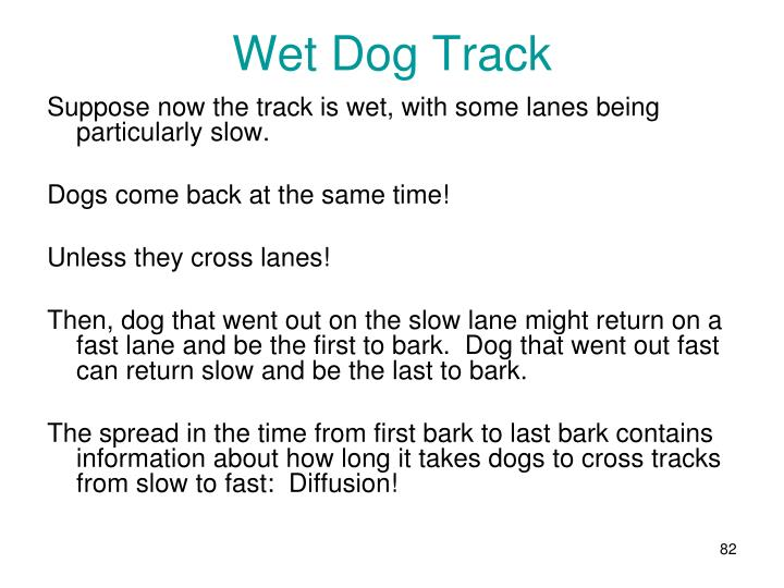 Wet Dog Track