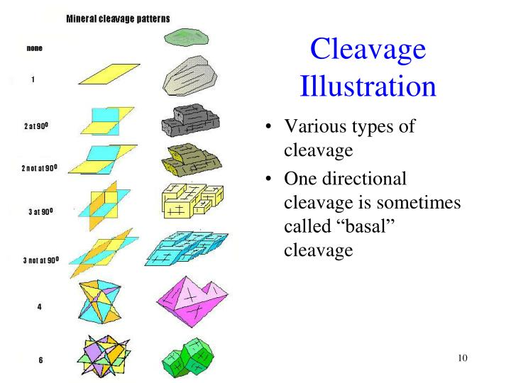 Cleavage Illustration