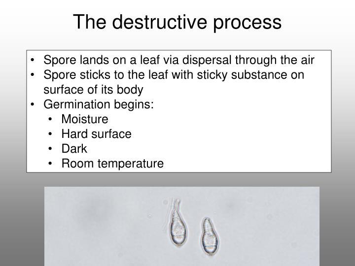 The destructive process