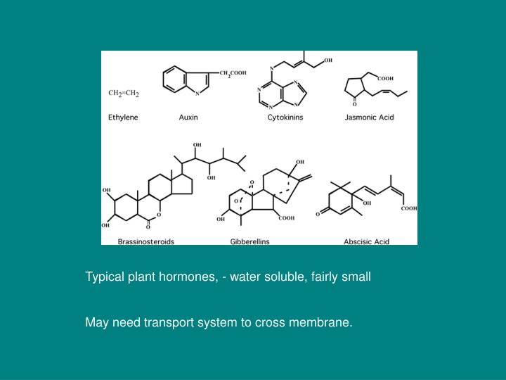 Typical plant hormones, - water soluble, fairly small