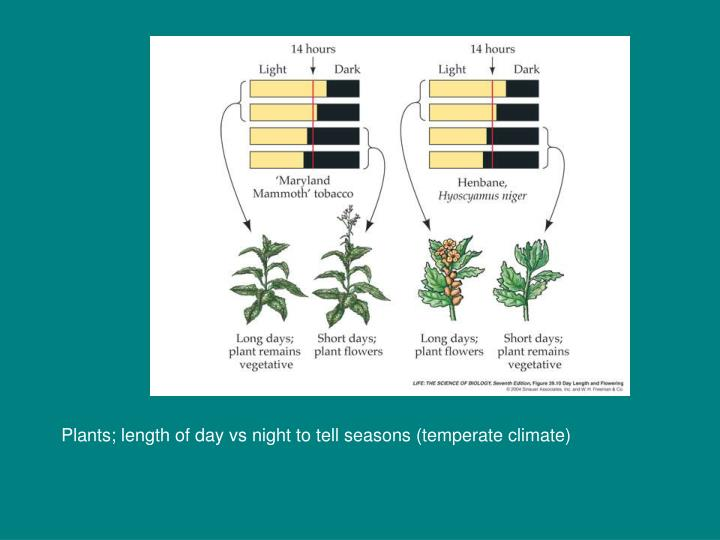 Plants; length of day vs night to tell seasons (temperate climate)