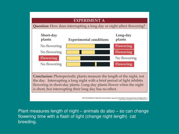 Plant measures length of night – animals do also – so can change flowering time with a flash of light (change night length)  cat breeding.