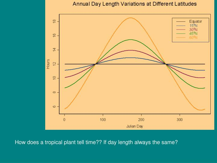 How does a tropical plant tell time?? If day length always the same?