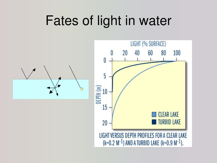 Fates of light in water