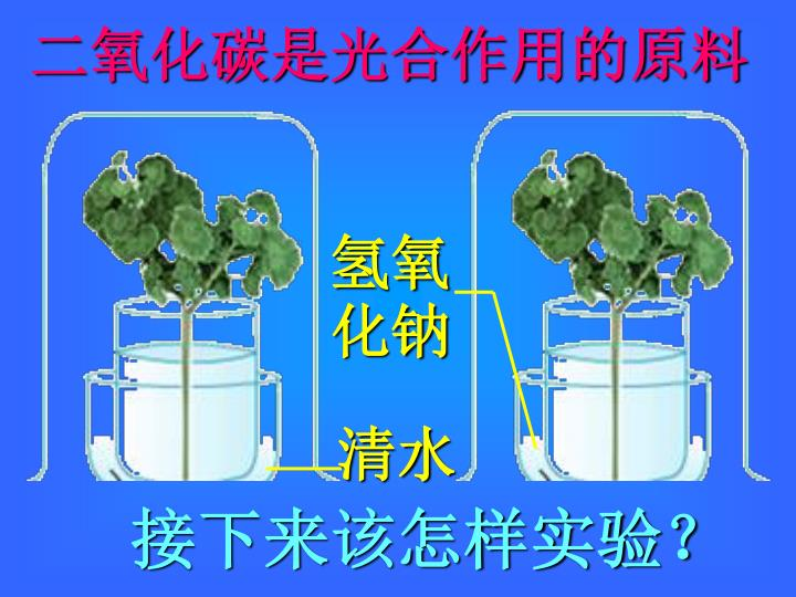 二氧化碳是光合作用的原料
