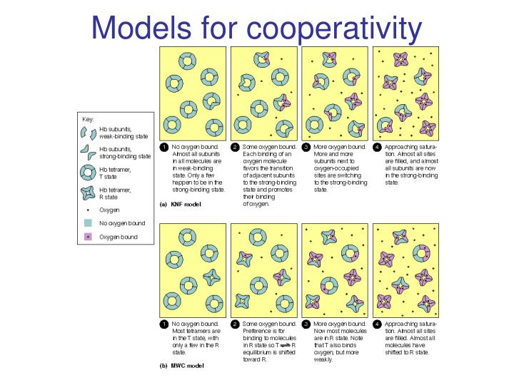 Models for cooperativity