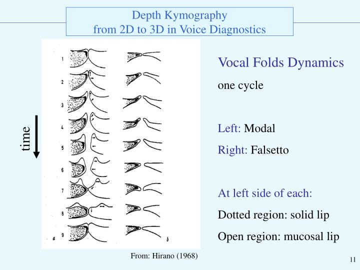Vocal Folds Dynamics