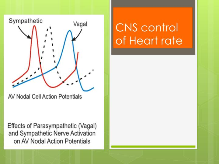 CNS control of Heart rate