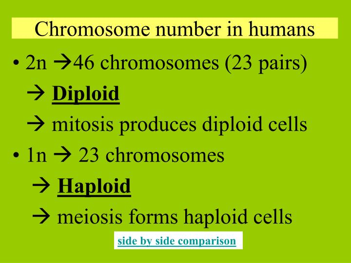 Chromosome number in humans