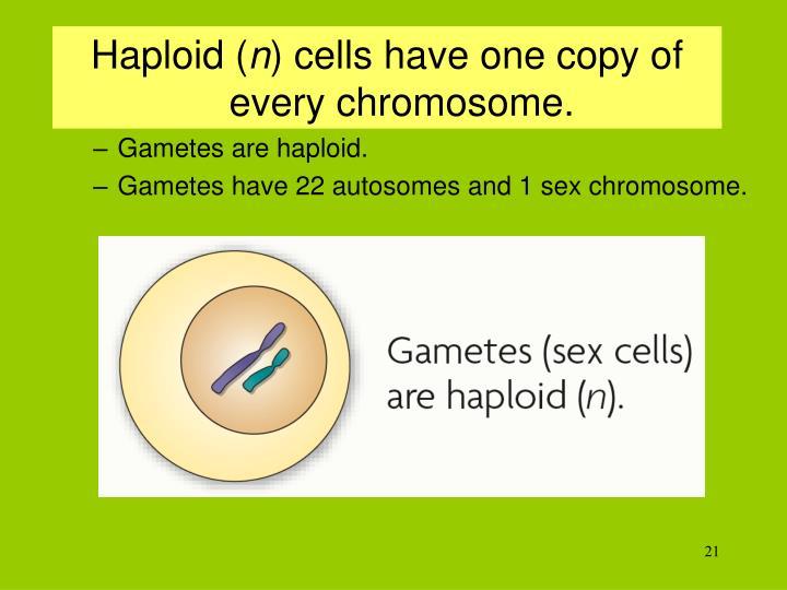 Haploid (